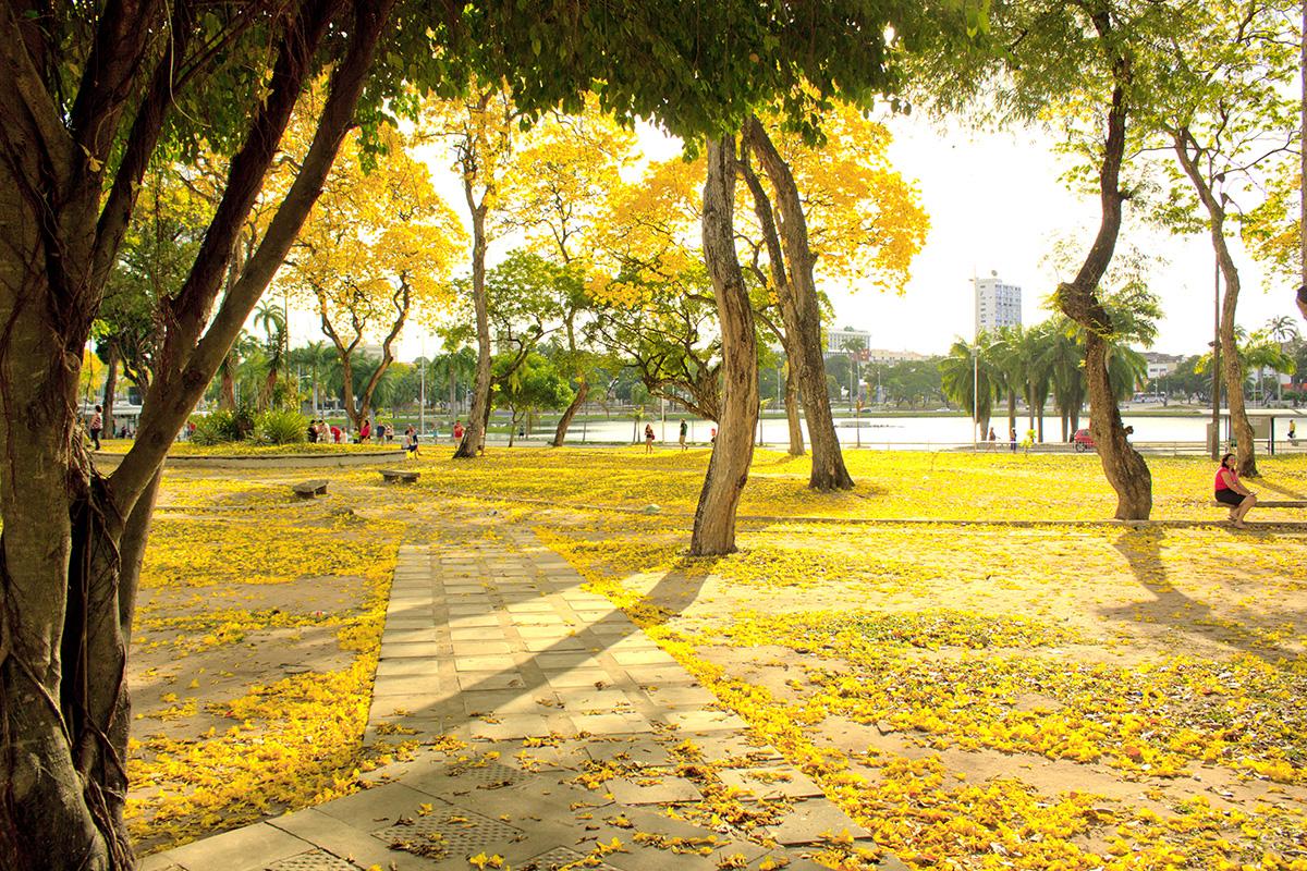 Parque Solon de Lucena - Ipês